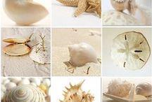 Seashells / by Gena Mayo @ I Choose Joy!