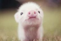 Piggie Pie / by Abigail Patricia