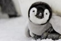 Penguin LoVe / by Abigail Patricia