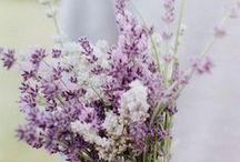 flowers / by Adriana Cristea