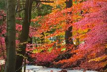 CONNECTICUT / The four seasons and the beauty of nature. / by Norma Heller