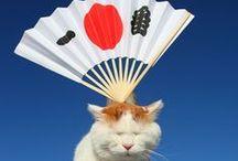 Gatos e outros bichinhos / by Tainá Gondariz