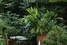 Garden ideas / by Anugerah Terindah