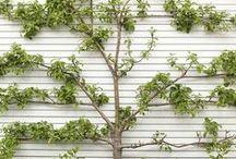Gardening How-To / Instructions & ideas to help me garden more effectively. / by Tara Blais Davison