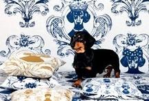 Dachshund Pretty / daschunds, dogs, cute dogs / by Tiffany Mullins