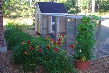 Chicken Coops / by Creative Designs by Sheila