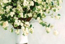 - Fleurs - / by Florrie Wilson