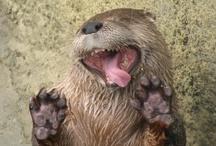Otters / by Jen Myers