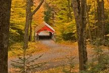 Covered Bridges of America / by T. ~Mulberry Spice~