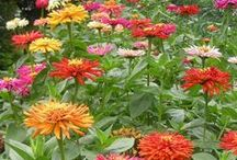 Amazing Annuals / Annuals are gardener's dream plant for color. I put them everywhere and in every type of container I can find.  / by Hawk Valley Garden Spencer, Iowa