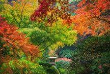 Nature's Beauty / by Joyce Hickman