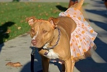 Animals that are looking for furever homes / by Laura Plaisance