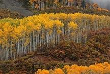 Colorado / by Teri Vaughn FP Metal Art and Antiques