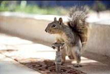 Squirrels / SQUIRREL! / by Chris Teague