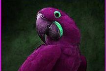 Beautiful Birds / by Marcea S