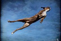 I've Never Met a Dog I Didn't Love / by Kat Bartlett