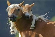 Horse Love / by Tracy Russell Stranahan