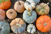 SEASONS {Autumn.} / Seasonal Decor ideas, Food ideas & golden leafed, pumpkin spiced delights! / by Tevia Guidroz