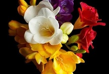 Flowers / by Sherri Dysart