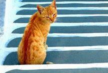 Kitty Cats / Cats are really special ! / by Jana Bertrand