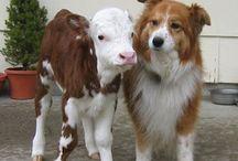 Animal Rights / by Samantha DeCaro