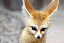 funny animals  / by puff sbuff
