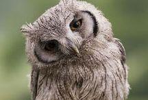All Things Owls! / by Tessa Patti