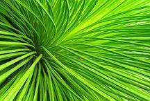 Green - Grünes / Alles, was grün ist - everything green... / by Irene Wolk - Kreativ im Web