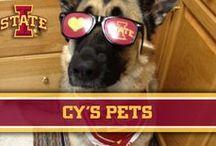 Cy's Pets / Iowa State College of Veterinary Medicine – Cy's Pets / by Iowa State Athletics