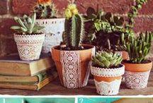 For the Garden / by Lauren Rossi