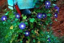 Gardening / by Cris Fyler