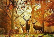 Fall/Autumn / by Angela Lawton