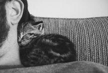 Ahh - CATS! / by Anne Davis Design