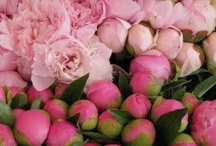 Peony Perfection / by Mar Hearts Chris Forever