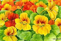 Flowers - Nasturtiums / by Becky Deming