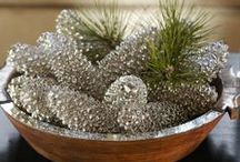 Pine Cones...DIY / by Becky