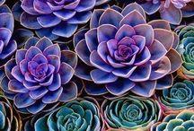 g r e e n / I love plants / by Amber Earl