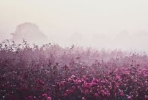 pretty. / by Meghan Simmet