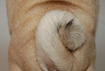 Pug Luv / by ReadKnitTea ~
