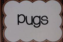Pugs / by Lisa Braun