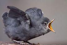 ++ BIRDS    / by Tere Sa