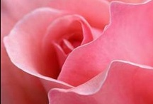 FLOWERS - PINK / by Tere Sa