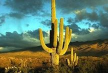 Nature - DESERTS / by Tere Sa