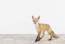 Fox / by Clemence - Oh The Lovely Things