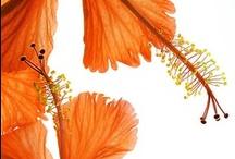 FLOWERS - ORANGE / by Tere Sa