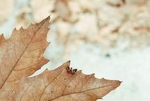 Autumn / by Clemence - Oh The Lovely Things