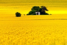 Must have Mustard Most Days, Mostly! / Love mustard yellow and yellows close to it!  / by Anna Villarreal Navarro