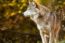 Wolves and birds of prey / by Roeljan B