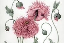 Botanicals / by Beckie Taylor