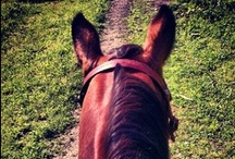 | horses | / Love my Foundation Bred Quarter Horse! :)  / by Kalin C.